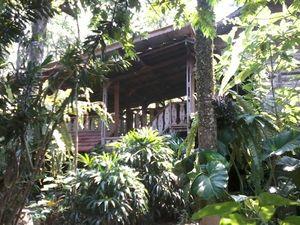 Liburan Hijau Ala Kampung 99 Pepohonan Depok