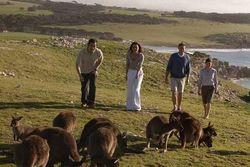 Ingin Bertemu Banyak Kanguru? Datang Saja ke Pulau Ini