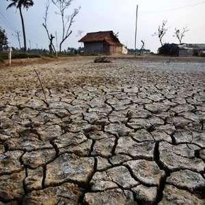 Dampak Kekeringan Hingga Hama, 100.000 Hektar Sawah Gagal Panen