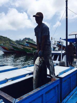 Sekali Melaut, Nelayan Tuna di Sulteng Bisa Raup Rp 36 Juta