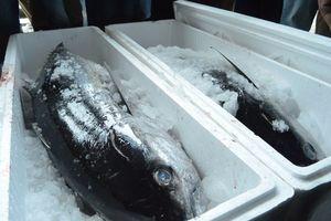Tangkapan Ikan Nelayan di Palu Naik 2 Kali Lipat, Susi: Saya Senang Sekali