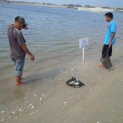 Banyak Ikan Mati, Pengunjung Ancol Diimbau Tak Berenang Dulu