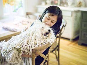 Ini Beast, Anjing Gimbal Zuckerberg yang Menggemaskan