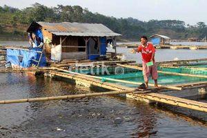 RI Masih Impor Tepung Ikan dari Peru dan Cile