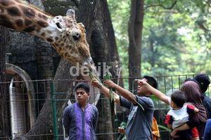 80 Ribu Wisatawan Sudah Kunjungi Kebun Binatang Ragunan
