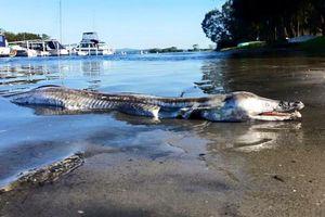Traveler Temukan Makhluk Aneh Terdampar di Pantai Australia
