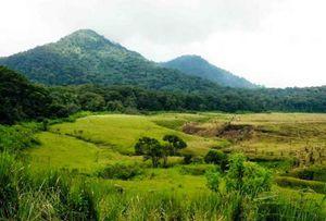 Padang Rumput yang Indah di Gunung Papandayan