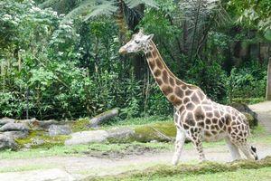Kenal Lebih Dekat dengan Satwa Lokal Hingga Luar Negeri di Taman Safari