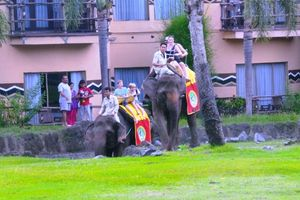 Ketika Bule Asyik Naik Gajah Keliling Bali Safari