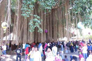 Pohon Keramat di Lombok Ini Dipercaya Bikin Enteng Jodoh & Rezeki