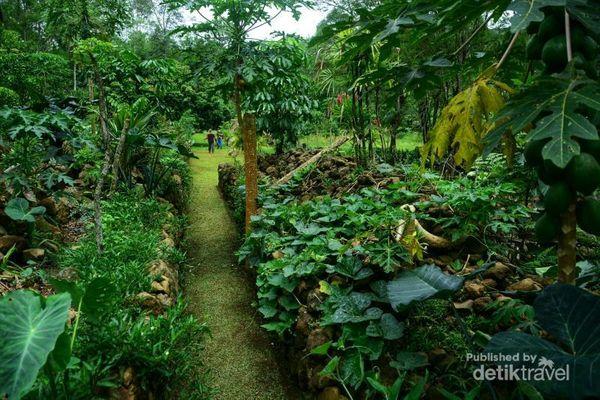 Tanaman buah dan sayuran di antara bebatuan