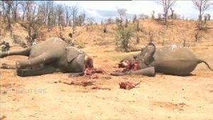 Sadis ! 23 Gajah Mati Karena Racun Sianida