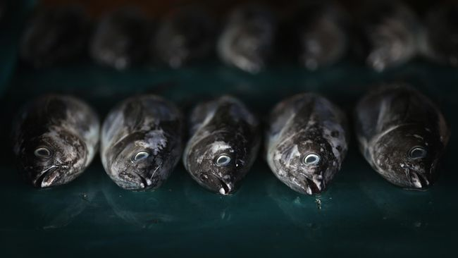 Indonesia dan China mencari solusi atas masalah perikanan yang kerap menimbulkan ketegangan di antara kedua negara, seperti insiden Natuna Maret lalu.