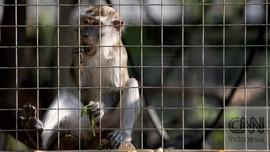 Polisi Sebut 8 Monyet Hendak Dilepas untuk Ganggu Pelantikan