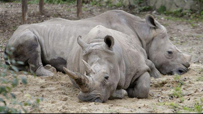 Akibat penebangan hutan yang tak terkendali, banyak binatang-binatang yang punah. Berikut 9 binatang yang paling jarang ditemui di muka bumi.