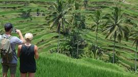 5 Sawah di Indonesia Selain Ubud dengan Pemandangan Unik