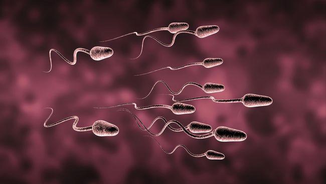 Sperma Dan Orgasme Bisa Picu Keguguran Pada Ibu Hamil
