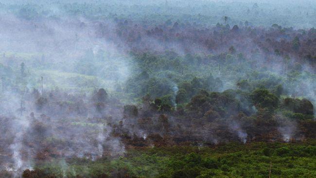 Sebuah desa dengan luas 130 hektar di Kabupaten Merangin, Jambi, dinilai telah memenuhi syarat secara hukum untuk ditetapkan sebagai hutan adat.