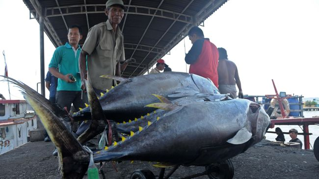 Susi Pudjiastuti melarang keras dilakukannya penangkapan ikan di perairan Laut Banda, Kepulauan Maluku yang terhubung dengan Teluk Tolo di Sulawesi Tengah.