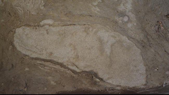 Para peneliti mengatakan manusia purba terdiri dari 36 Neanderthal berjalan di sepanjang pantai sekitar 100 ribu tahun yang lalu.