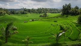 Hening Bali dan Denting Alarm Pandemi Virus Corona