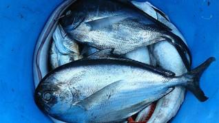 KKP Bekukan Sementara Eksportir Ikan yang Terpapar Corona