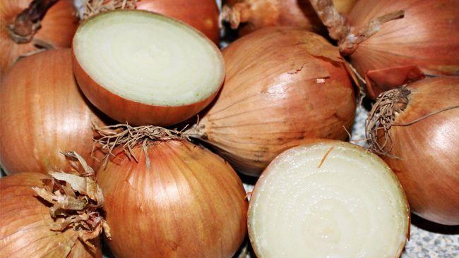 Bawang bombay perlu dikonsumsi dalam porsi yang pas. Konsumsi bawang bombay berlebih bisa memicu masalah kesehatan tertentu.