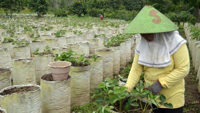 Pengamat pertanian menilai penundaan ekspor dan impor produk tertentu dari dan ke China bisa dimaanfaatkan petani Bali.