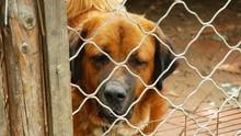 Anjing Penggigit Bocah di Medan Dibawa Polisi