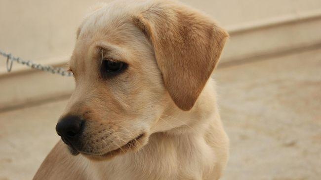 Anjing German Shepherd di Houston membuat jutaan netizen terharu karena kesetiaannya menanti tuannya yang tewas tertembak perampok.