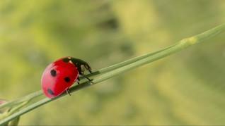 Populasi di Ambang Kepunahan, Kiamat Serangga Makin Dekat
