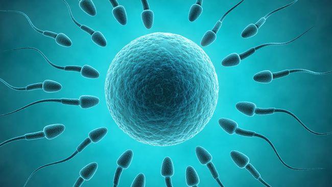 Sebuah studi kasus menemukan diet keto dapat meningkatkan kualitas sperma. Peningkatan jumlah sperma terjadi seiring dengan menurunnya berat badan seorang pria.
