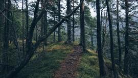 Hilang 5 Hari di Hutan, Perempuan Australia Ditemukan Selamat