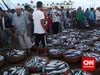 Bulan Puasa, Kebutuhan Ikan Diprediksi Naik Hingga 20 Persen