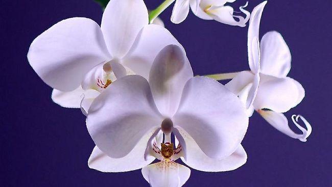 Selain Cantik 10 Bunga Ini Ternyata Bisa Dimakan