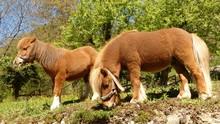 Belajar Menunggang Kuda bak Koboi di Branchsto BSD