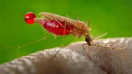 Cara Lindungi Diri dari DBD di Tengah Pandemi Covid-19