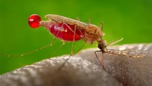 Peneliti Uganda Temukan Parasit Malaria Kebal Obat