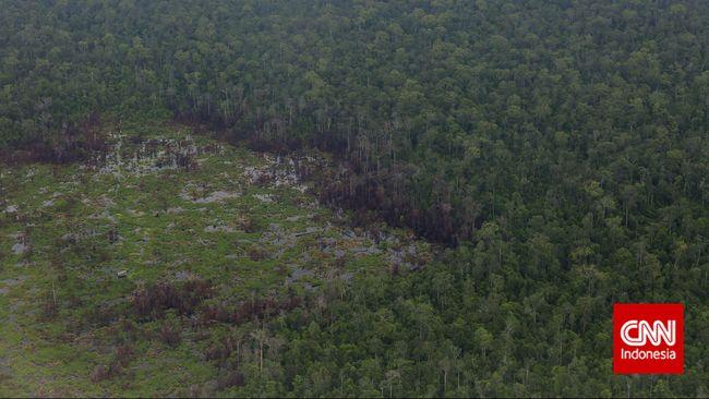 Menteri PPN/Bappenas Bambang Brodjonegoro memastikan pemindahan ibu kota ke Kalimantan tak akan mengurangi luas hutan lindung di kawasan tersebut.