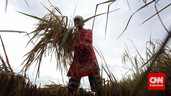 BPS mengumumkan bahwa jumlah produksi padi nasional sepanjang 2014 diperkirakan mengalami penurunan sebesar 0,63 persen menjadi 70,83 juta ton.