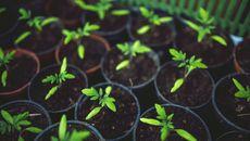 7 Cara Ajak Anak untuk Berkebun