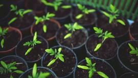 6 Sayuran yang Mudah Ditanam di Pot