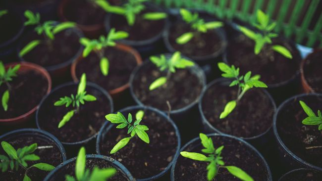 Ilustrasi pot tanaman