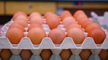 Merunut Penurunan Harga Telur Berujung Peternak 'Ngamuk'