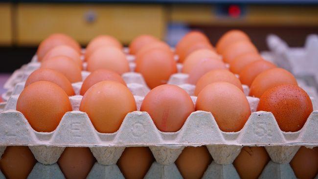 Kejatuhan harga telur yang membuat peternak mengamuk baru-baru ini sudah terjadi sejak akhir tahun lalu.