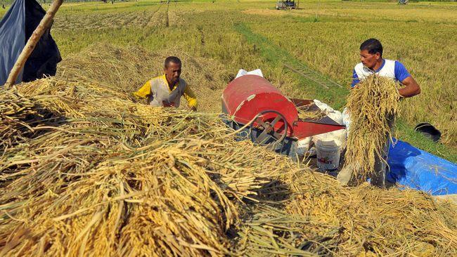 Hama ulat penggulung padi menyerang sekitar 15 hektare padi di Kabupaten Mukomuko, Provinsi Bengkulu, sejak seminggu terakhir.