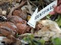 Gegana: Semua Amunisi yang Ditemukan di Sukabumi Berbahaya