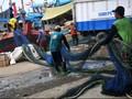 Jokowi Perpanjang Moratorium Penggunaan Cantrang