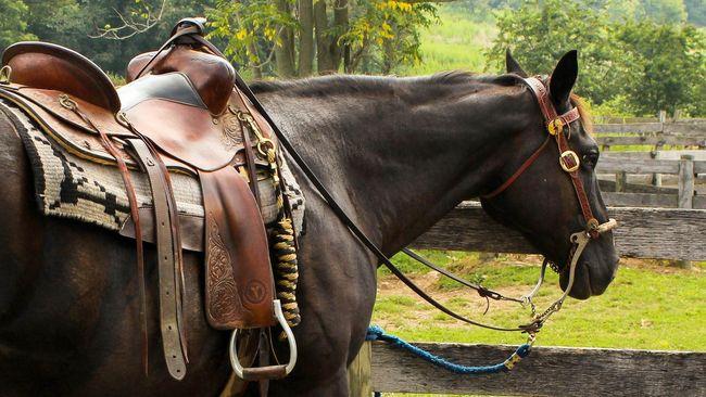 Seorang perempuan Inggris, Susan Govindasamy, berurusan dengan Interpol gara-gara mengirim uang untuk kuda bernama Isis.