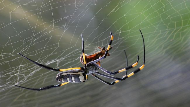 Karena terlalu kesumat saat membunuh laba-laba, pria Australia dikira melakukan kekerasan terhadap anak-anak sampai dicurigai polisi.